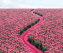 field,flowers,paths,pink,roads,zipper-7c1097c11eec22cd127782ed1632510d_m.jpg